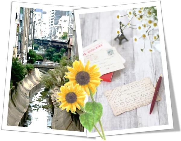 渋谷川と向日葵とエアメール